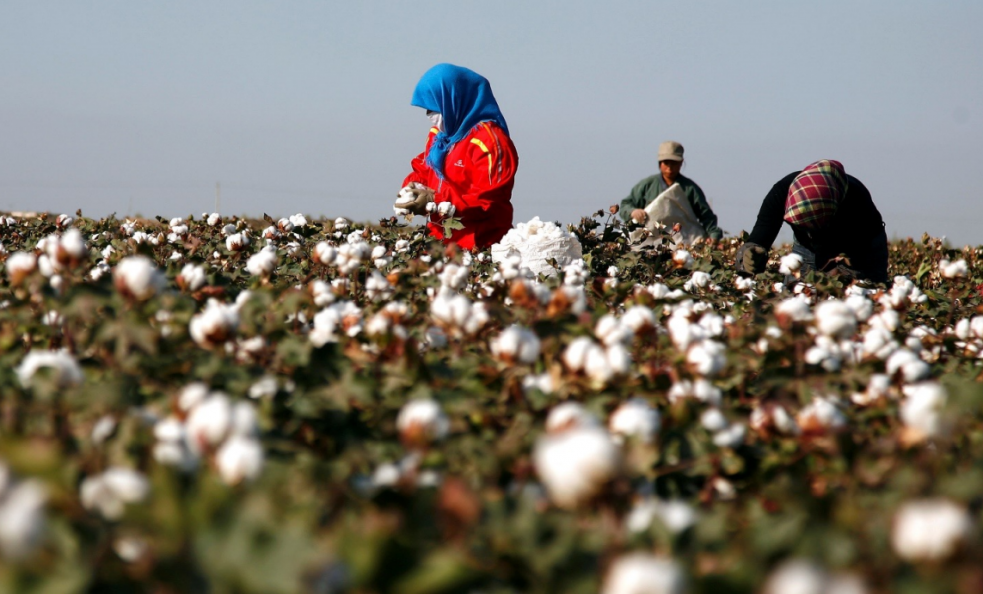 CCFgroup: ZCE cotton hikes driven by macro environment, how about fundamentals?