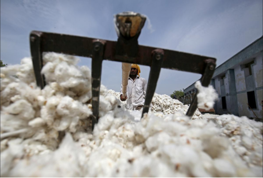 Could India Be a Key Market for U.S. Cotton?