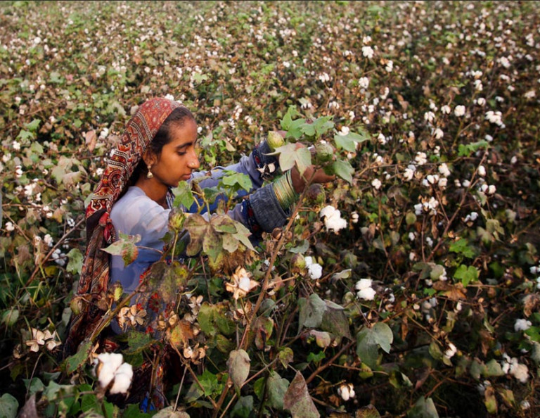 PAKISTAN: Cotton import expected to hit record high of 5 million bales