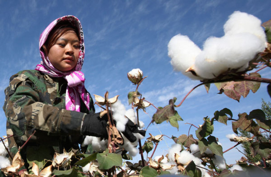 CHINA: What about seed cotton prices and ginning costs in early 2019/20?