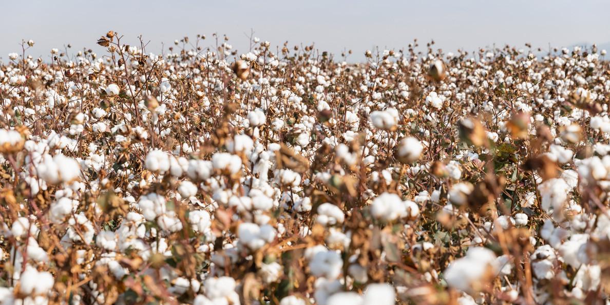 Πρόγραμμα Ολοκληρωμένης Διαχείρισης CottonBest ST 318