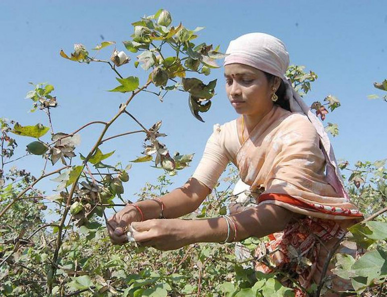 Indian trade body cuts cotton exports estimate