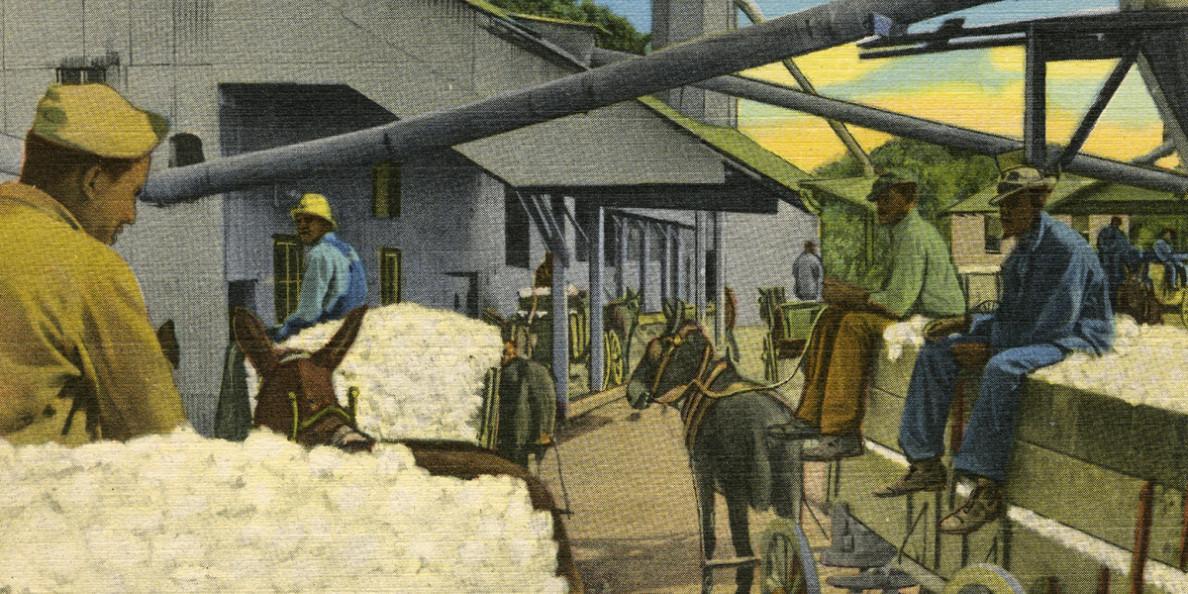Ένα νήμα στο χρόνο: H ιστορία του βαμβακιού