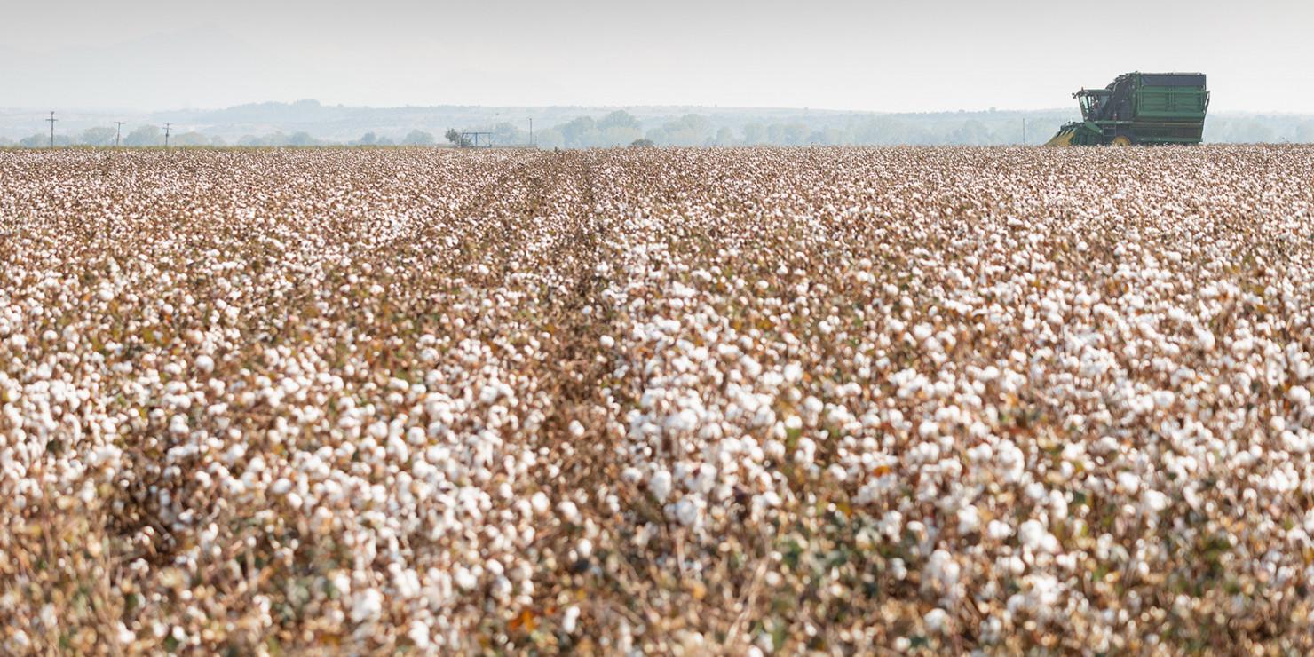 cotton artile