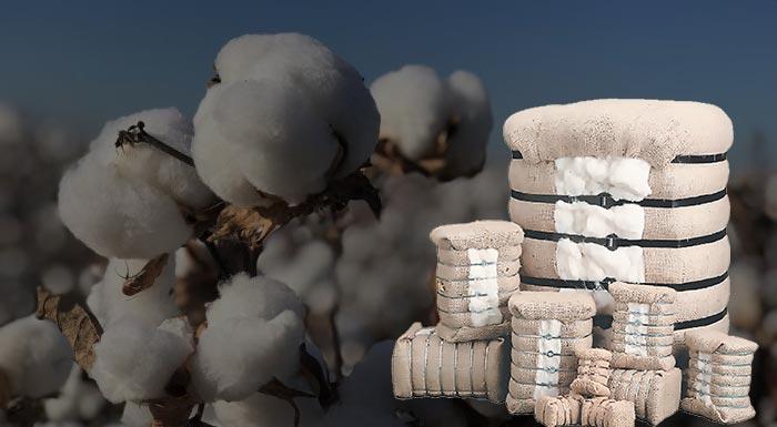Έγινε με επιτυχία η τηλεδιάσκεψη με θέμα «Cotton+: Τι ισχύει για το 2021»