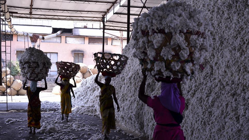 India's state-run cotton buyer raises procurement to help farmers