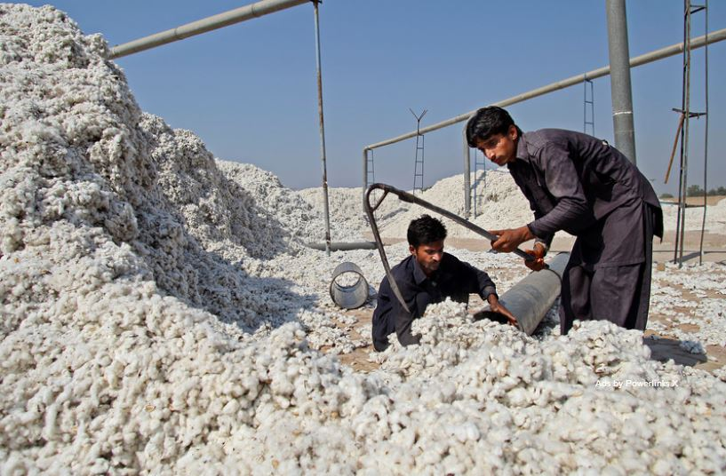 PAKISTAN: Farmers fear further decline in cotton production